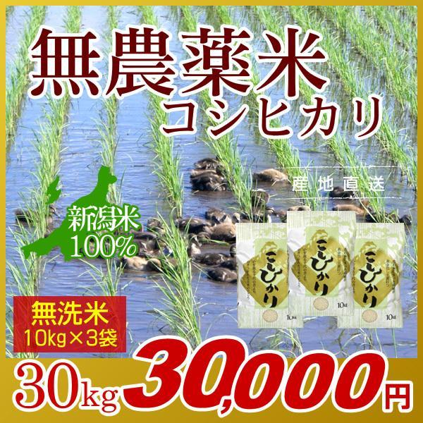 無農薬米 コシヒカリ 無洗米 30kg(10kg×3袋) 新米/アイガモ米 自然栽培米 新潟米