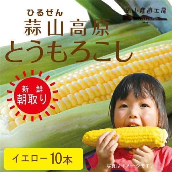 お中元 ギフト とうもろこしイエロー10本  蒜山高原トウモロコシ 冷蔵 12-01-26