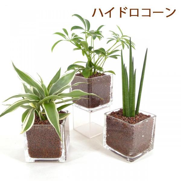 【送料無料】キュートキューブ 3鉢セット ハイドロコーン植え 炭植え 観葉植物/ハイドロカルチャー/水耕栽培/インテリアグリーン|julli|02