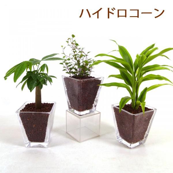 【送料無料】スクエアグラス 3コセット ハイドロコーン植え 炭植え 観葉植物/ハイドロカルチャー/水耕栽培/インテリアグリーン|julli|02