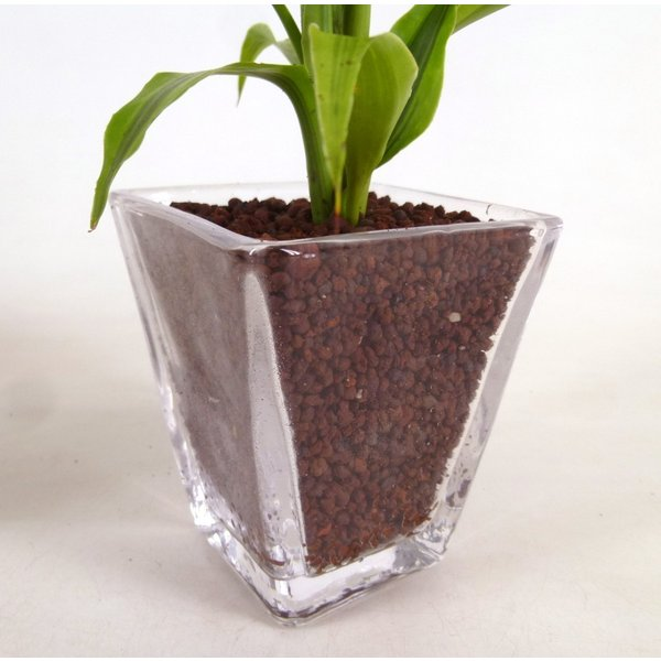 【送料無料】スクエアグラス 3コセット ハイドロコーン植え 炭植え 観葉植物/ハイドロカルチャー/水耕栽培/インテリアグリーン|julli|04