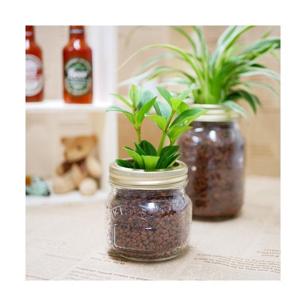 ジャーポットS ハイドロコーン植え 観葉植物/ハイドロカルチャー/水耕栽培/インテリアグリーン|julli