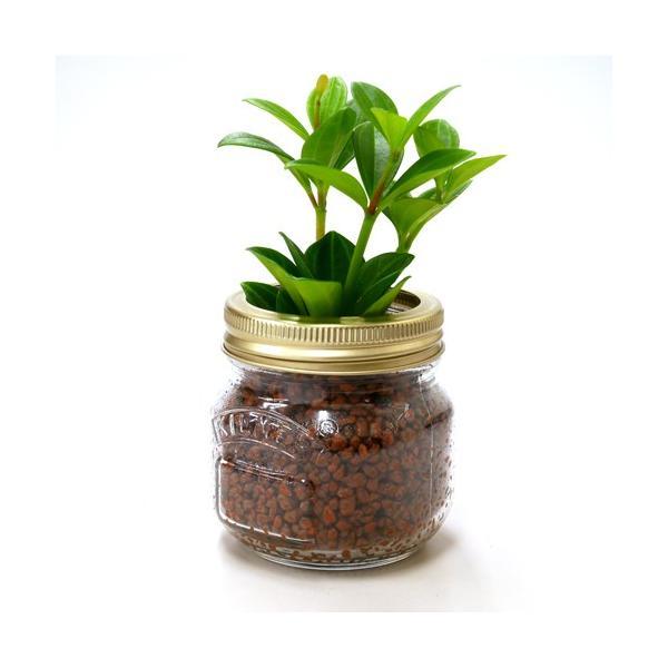ジャーポットS ハイドロコーン植え 観葉植物/ハイドロカルチャー/水耕栽培/インテリアグリーン|julli|02