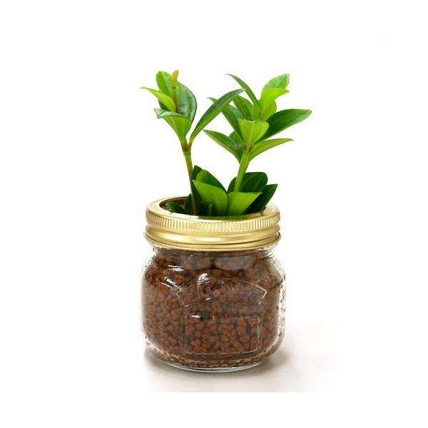 ジャーポットS ハイドロコーン植え 観葉植物/ハイドロカルチャー/水耕栽培/インテリアグリーン|julli|03