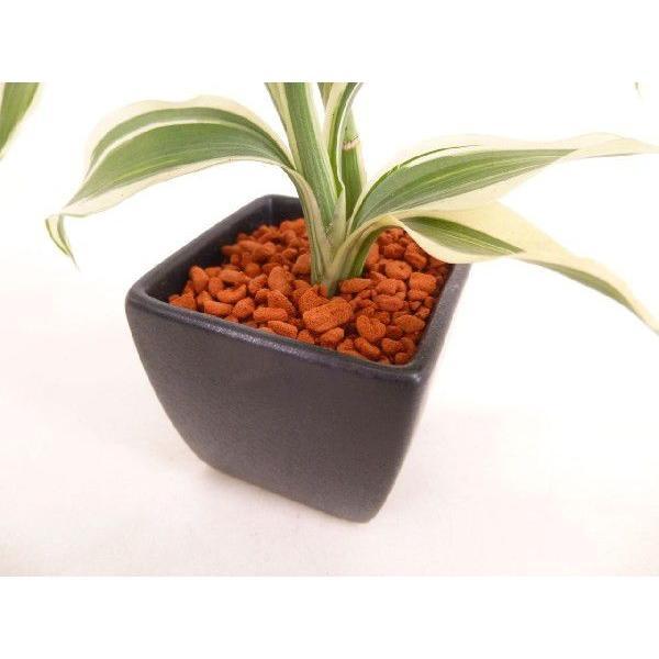 オードリー トリプル 皿つき 角 セラミス植え 観葉植物/ハイドロカルチャー/水耕栽培/インテリアグリーン|julli|04