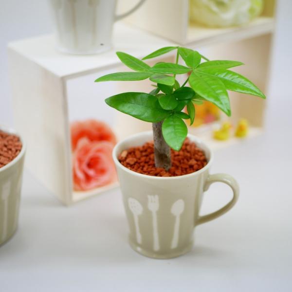 カトラリーカップ セラミス植え 観葉植物/ハイドロカルチャー/水耕栽培/インテリアグリーン|julli|03