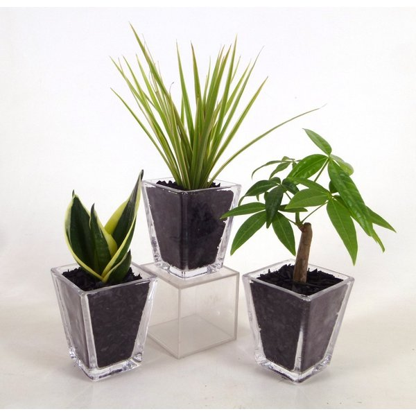 GブロックS スクエア 3個セット 炭植え 観葉植物 ハイドロカルチャー 水耕栽培 インテリアグリーン