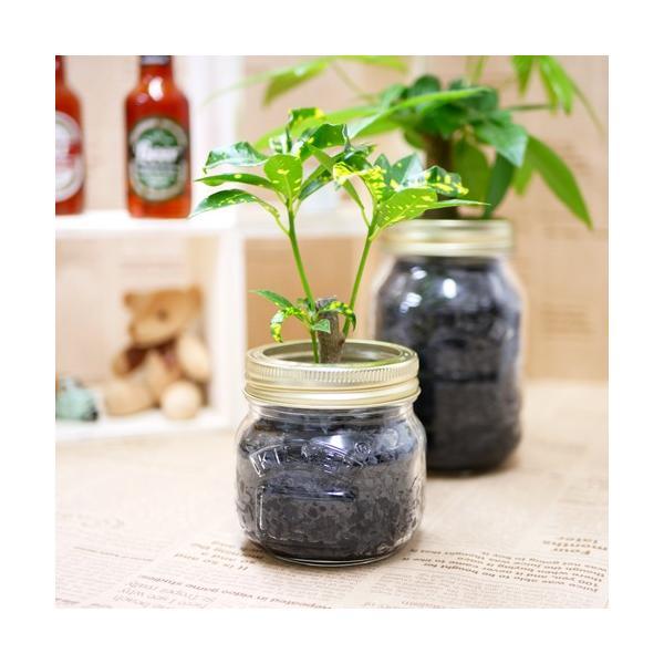 ジャーポットS 炭植え 観葉植物/ハイドロカルチャー/水耕栽培/インテリアグリーン|julli