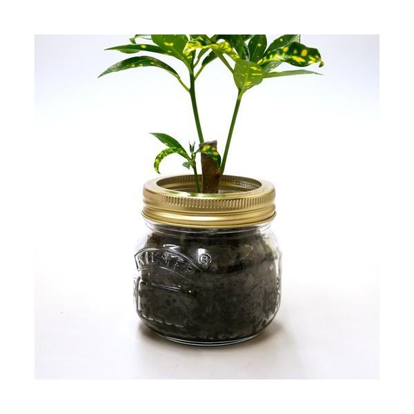 ジャーポットS 炭植え 観葉植物/ハイドロカルチャー/水耕栽培/インテリアグリーン|julli|03