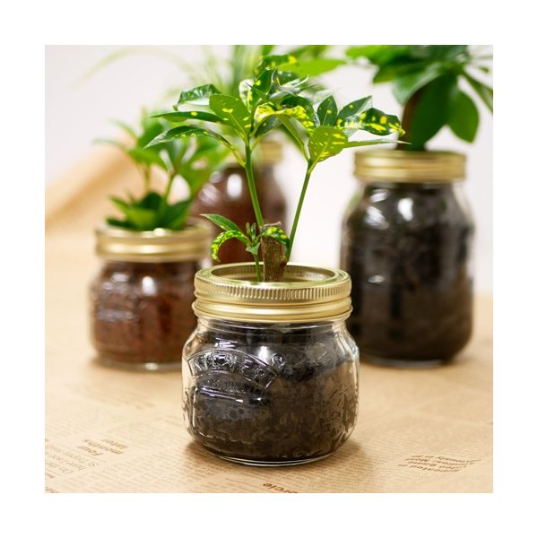 ジャーポットS 炭植え 観葉植物/ハイドロカルチャー/水耕栽培/インテリアグリーン|julli|04