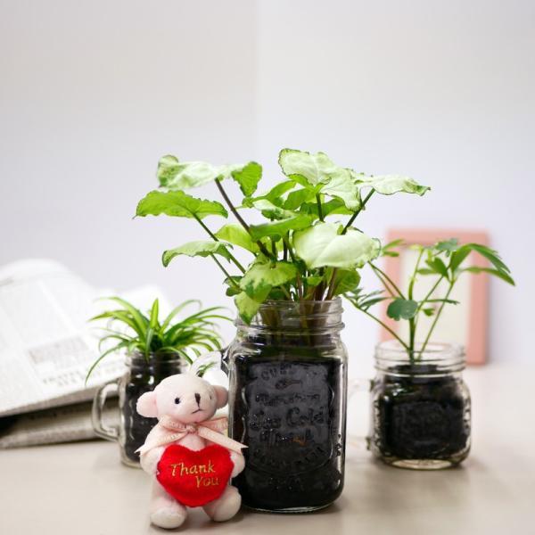 ドリンクジャーM 炭植え 観葉植物 ハイドロカルチャー 水耕栽培 インテリアグリーン