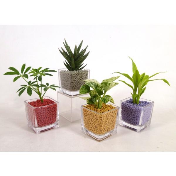 GブロックS キューブ リサコ植え カワラカルチャー 観葉植物/ハイドロカルチャー/水耕栽培/インテリアグリーン|julli