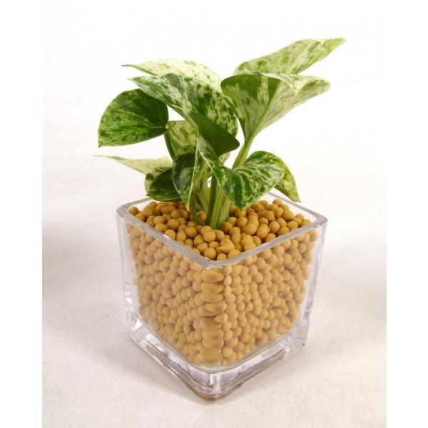 GブロックS キューブ リサコ植え カワラカルチャー 観葉植物/ハイドロカルチャー/水耕栽培/インテリアグリーン|julli|03