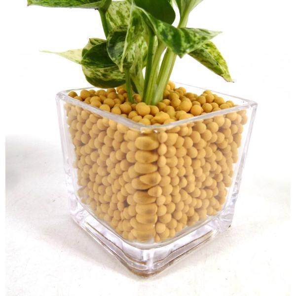 GブロックS キューブ リサコ植え カワラカルチャー 観葉植物/ハイドロカルチャー/水耕栽培/インテリアグリーン|julli|04