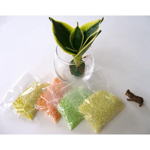 カラーサンド植え作成キット 観葉植物/ハイドロカルチャー/水耕栽培/インテリアグリーン|julli|02
