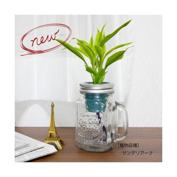 ウォータリウム ドリンクジャーM レインボーサンド植え 観葉植物 ハイドロカルチャー 水耕栽培 インテリアグリーン