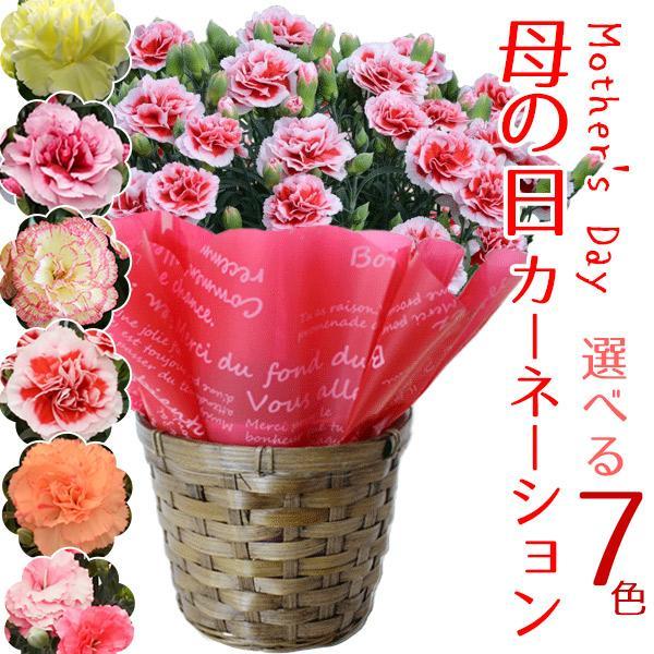母の日2021カーネーション6色から選べる5号鉢花プレゼントギフト母の日ギフト花鉢-同梱不可-