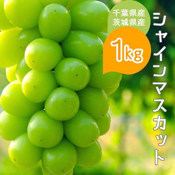 シャインマスカット 約1kg 千葉県・茨城県産 ぶどう 葡萄 種なし 種無し 皮ごと 果物 フルーツ ギフト プレゼント お祝い 贈り物 送料無料