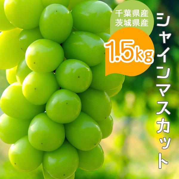 シャインマスカット 約1.5kg 千葉県・茨城県産 ぶどう 葡萄 種なし 種無し 皮ごと 果物 フルーツ ギフト プレゼント お祝い 贈り物 送料無料