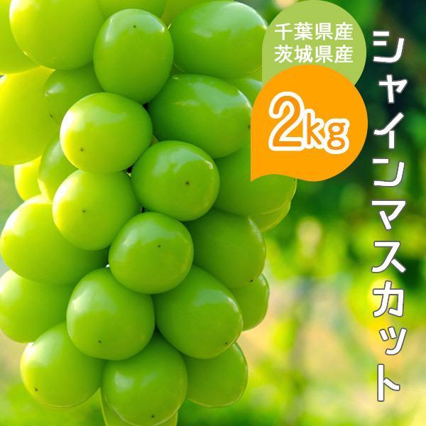 シャインマスカット 約2kg 千葉県・茨城県産 ぶどう 葡萄 種なし 種無し 皮ごと 果物 フルーツ ギフト プレゼント お祝い 贈り物 送料無料