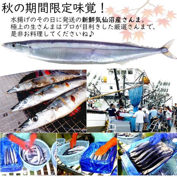 さんま 秋刀魚 10尾  1尾130g以上  海鮮 送料無料 お取り寄せ ご当地グルメ 気仙沼直送 サンマ 生|k-sozaiya|11