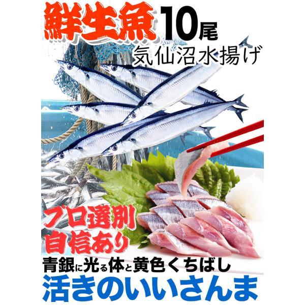 さんま 秋刀魚 10尾  1尾130g以上  海鮮 送料無料 お取り寄せ ご当地グルメ 気仙沼直送 サンマ 生|k-sozaiya|03