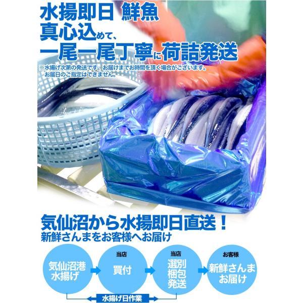 さんま 秋刀魚 10尾  1尾130g以上  海鮮 送料無料 お取り寄せ ご当地グルメ 気仙沼直送 サンマ 生|k-sozaiya|04