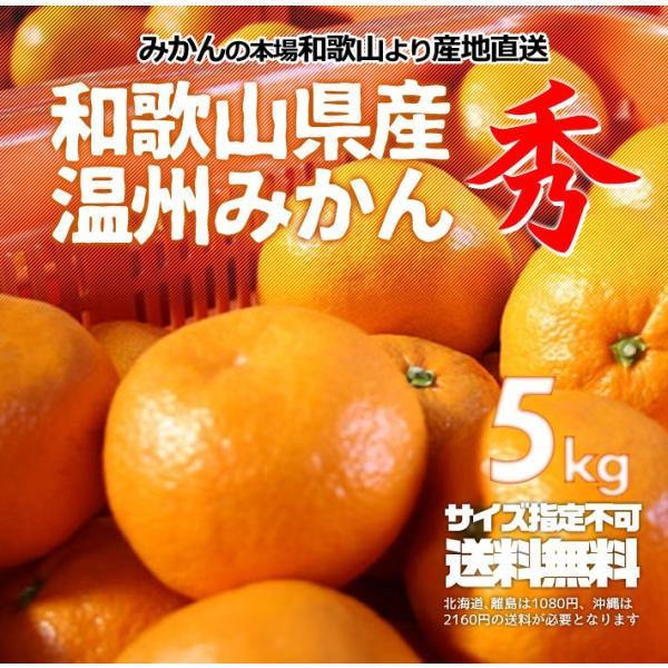 みかん 秀品 5kg 和歌山県産 温州みかん 産地直送 無選別 送料無料