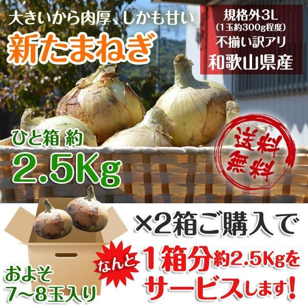 新玉ねぎ たまねぎ 和歌山県産 約2.5kg 2セット買えば1箱分おまけ 訳あり 送料無料 玉葱 タマネギ|k-yorozuya