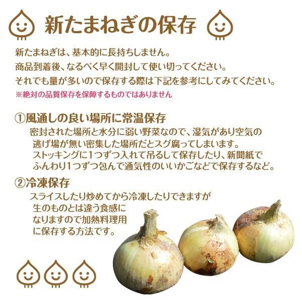 新玉ねぎ たまねぎ 和歌山県産 約2.5kg 2セット買えば1箱分おまけ 訳あり 送料無料 玉葱 タマネギ|k-yorozuya|03