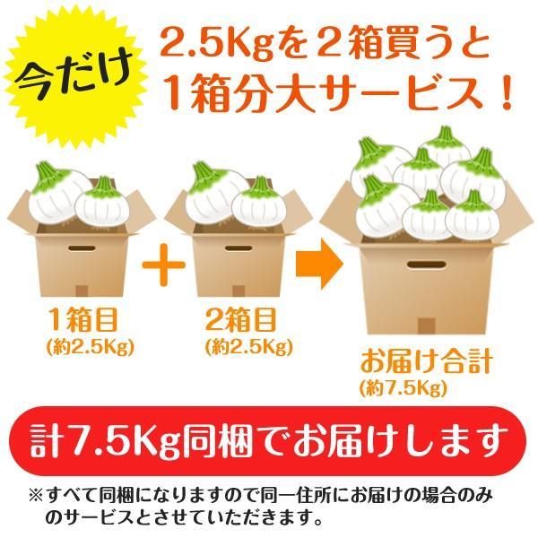 新玉ねぎ たまねぎ 和歌山県産 約2.5kg 2セット買えば1箱分おまけ 訳あり 送料無料 玉葱 タマネギ|k-yorozuya|04