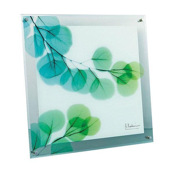 【納期目安:1週間】CMLF-1064854 X RAY ガラス アート ユーカリ Lサイズ XR-07010 (CMLF1064854)