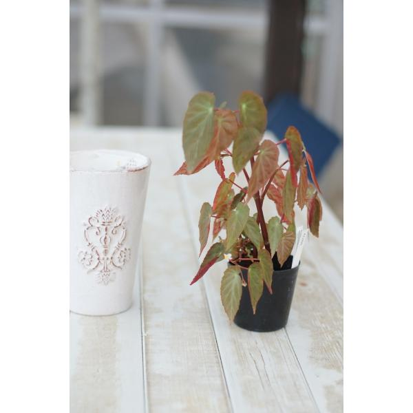 アンティ―クロングポット 花、ガーデニング 園芸用品 鉢、プランター 植木鉢 DIY、工具 庭、ガーデニング 鉢、プランター 植木鉢 (4053)|kagoen-nursery|02