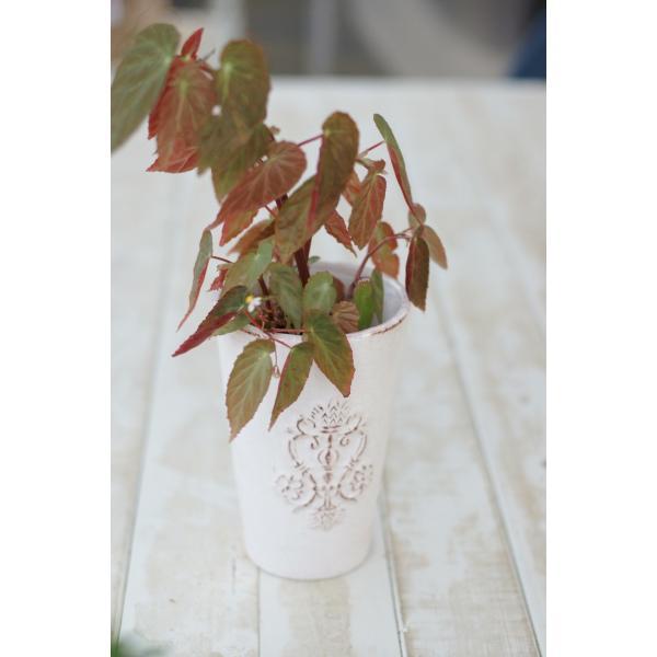 アンティ―クロングポット 花、ガーデニング 園芸用品 鉢、プランター 植木鉢 DIY、工具 庭、ガーデニング 鉢、プランター 植木鉢 (4053)|kagoen-nursery|03