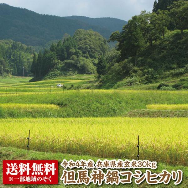 【新米】【令和3年産】兵庫県たじまコシヒカリ玄米30kg 【送料無料】【こしひかり】【精米料無料】