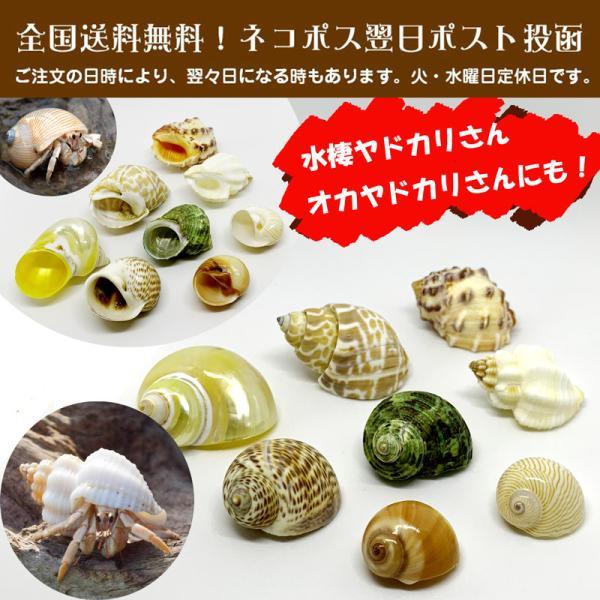  ヤドカリ引越用貝殻 S-Mセット 01