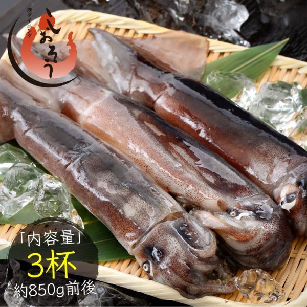 いか イカ 生 するめいか 3杯(約850g前後)日本海産 スルメイカ 冷凍