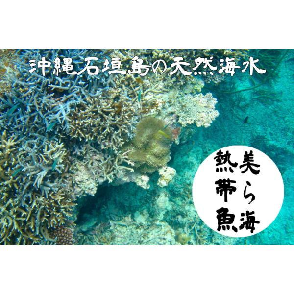 沖縄石垣島の天然海水20リットル汲みたて直送(送料無料)【美ら海熱帯魚】|kaisui-okinawa