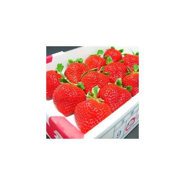福岡県産 いちご 特選 あまおう 12粒入り  イチゴ お歳暮 ギフト  出荷予定:12月上旬〜