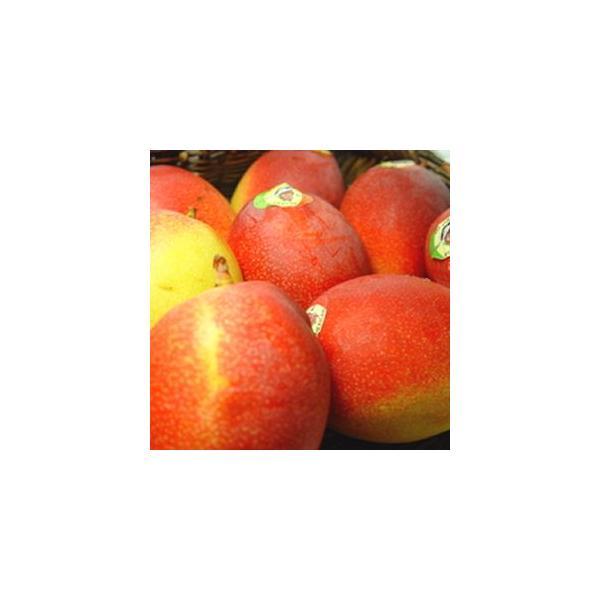 メキシコ産アップルマンゴー 3個入り  出荷予定:4月上旬〜 父の日 ギフト