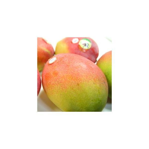 メキシコ産アップルマンゴー 小玉3個入り  出荷予定:4月上旬〜 父の日 ギフト
