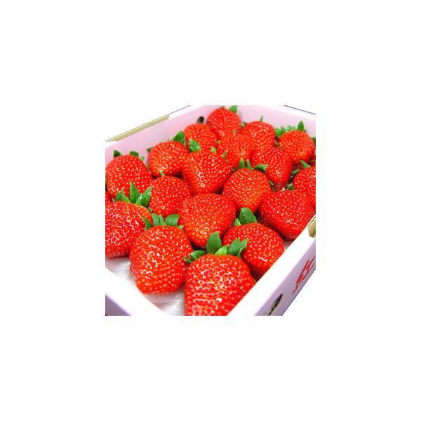 愛媛県 徳島県産 いちご 紅ほっぺ 20粒入り 苺の優良品種 イチゴ ギフト お歳暮 発送:12月上旬〜
