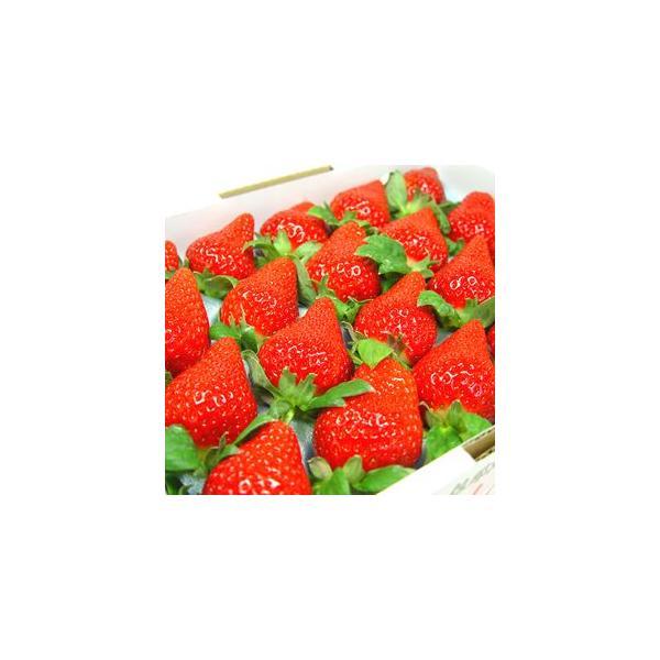 徳島県佐那河内村産 さくらももいちご 20粒入り  イチゴ お歳暮 発送:12月中旬〜下旬の間 到着日の指定不可 ももいちご の里で育った苺の新品種