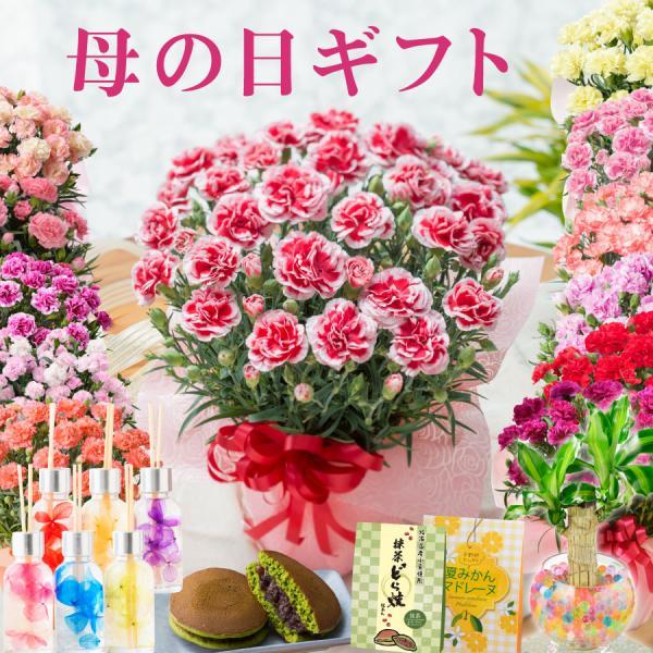 母の日プレゼント 花色選べるカーネーション鉢植えフラワーギフト