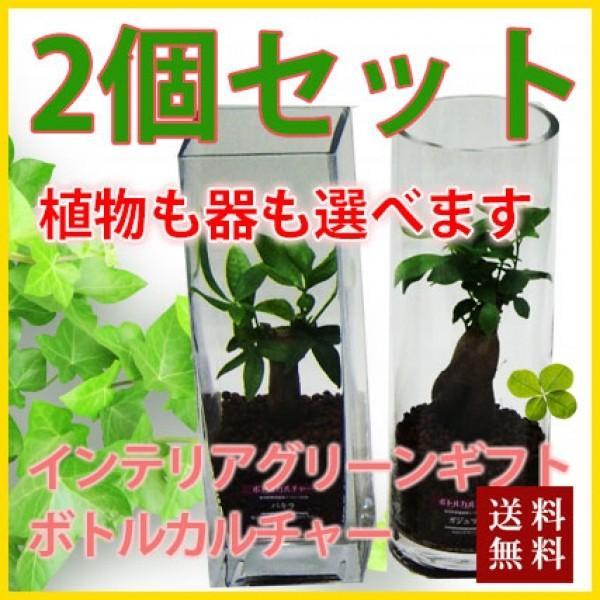 ハイドロカルチャー 2個セット ボトルカルチャー 観葉植物 鉢植えの花 鉢植え プレゼント誕生日 結婚記念日 結婚祝い 画像 送料無料