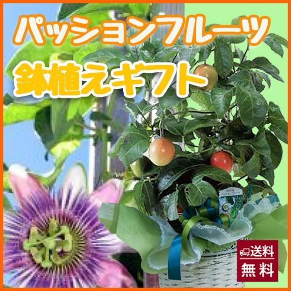 パッションフルーツ 実付き 鉢植ギフト 鉢植えの花 鉢植え プレゼント誕生日 結婚記念日 結婚祝い 画像 送料無料