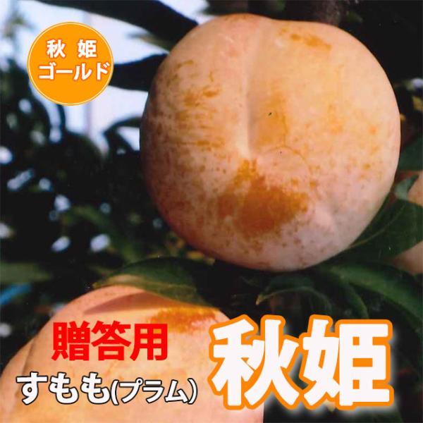 スモモ すもも 秋姫 贈答品 秀品 1.5kg 7個〜10個入り 満杯詰