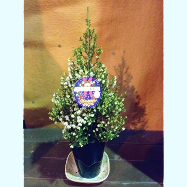 エリカ 鉢 スズランエリカ クリスマス 絵梨花 鉢植えの花 鉢植え 4号 4寸40〜45cm クリスマスエリカ クリスマス絵梨花 誕生日 結婚記念日 山梨