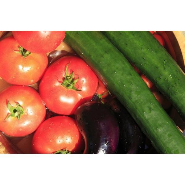 【柿ちゃん印】旬の新鮮野菜詰め合わせ 梅