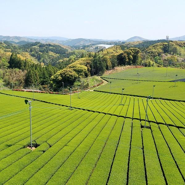 角田製茶 奥八女新茶 2本詰合わせ|kakudaseicha|02